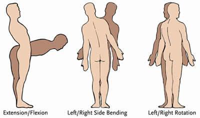 Anatomia 5